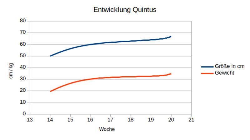Entwicklung Quintus